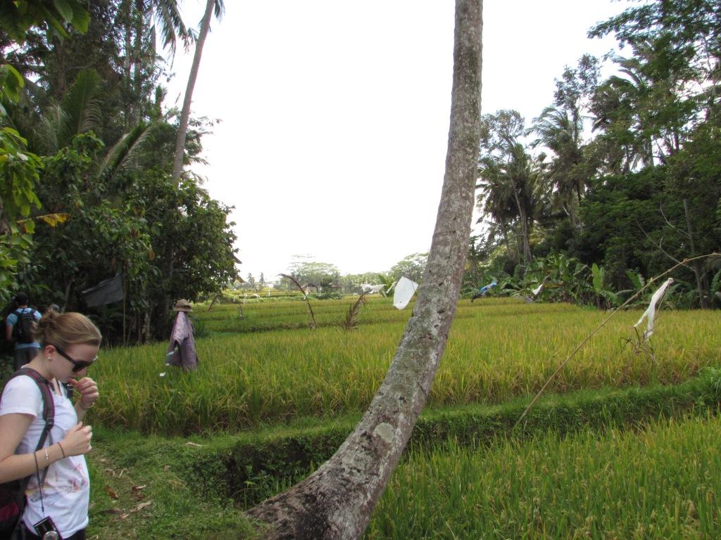 rice_paddies2