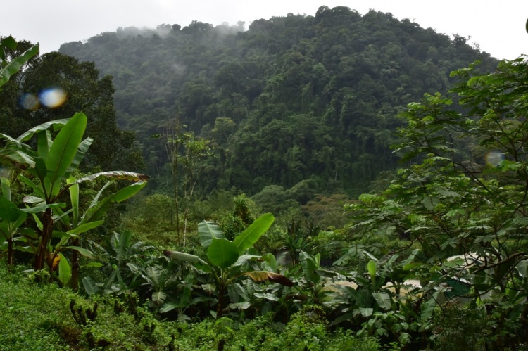 cloud-forest-at-rancho-margot