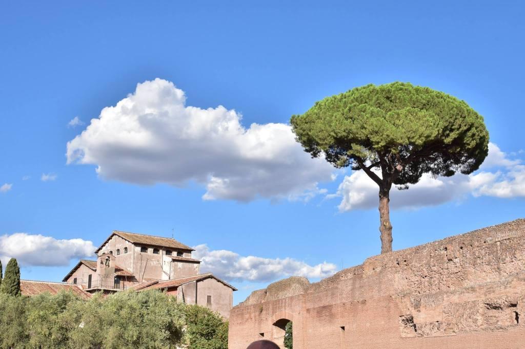 palatine-hill-rome-a-savory-planet